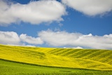 Rolling Hills of Canola and Pea Fields with Fresh Spring Color Photographic Print