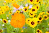 Wildflowers Photographic Print by Frank Lukasseck
