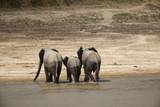 African Elephants Crossing River Photographic Print by Michele Westmorland