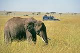 Elephant in Kenya Photographic Print by Buddy Mays