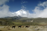 Horses in Cotopaxi National Park Photographic Print by Guido Cozzi