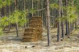 Pine Needle Harvest Photographic Print by Gary Carter