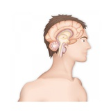 Brain, Drawing Giclee Print by Caroline Arquevaux