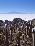 Salar De Uyuni and Cactuses in Isla De Pescado, Bolivia Photographic Print by Massimo Borchi