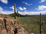 Landscape, Saguaro National Park, Arizona, USA Photographic Print by Massimo Borchi