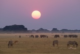 Elephants and Zebras at Sunset Photographic Print by Sergio Pitamitz