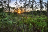Sunrise in Mahogany Hammock Photographic Print by Terry Eggers