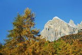 Mountain Impression Autumnal Larch Forest at Tofana De Rozes, Cortina D'ampezzo, Veneto, Dolomites, Photographic Print by Frank Krahmer