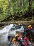 View of River near Arethusa Falls, White Mountains, New Hampshire, USA Photographic Print by Massimo Borchi