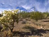 Cactus, Sonoran Desert, Organ Pipe Cactus National Park, Arizona, USA Photographic Print by Massimo Borchi