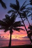 Palm Trees at Sunset on Keawekapu Beach, Wailea, Maui, Hawaii Photographic Print by Ron Dahlquist