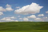 Spring Rolling Hills of Wheat and Clouds Photographic Print by Terry Eggers