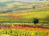Autumn Vinyards in Full Color near Montepulciano Photographic Print by Terry Eggers