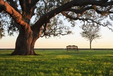 A Grand Oak Tree Overhangs a Lone Bench at Sunset. Photographic Print by Jason Langley