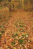 Hiking Trail through Beech Forest in Autumn Photographic Print by Frank Krahmer