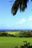 Sandy Lane, Green Monkey Golf Course Photographic Print by Stefano Amantini
