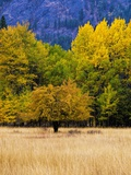 Autumn Aspen Trees in Color Photographic Print by Terry Eggers