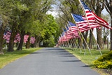 United States of America Flags Lining Tree Lined Road Photographic Print by Terry Eggers