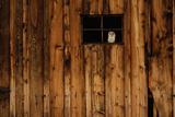 W. Perry Conway - Barn Owl in Barn Window Fotografická reprodukce