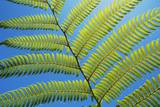 Cycad Leaf Photographic Print by Frank Krahmer