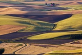 Crops of Wheat and Peas Nearing Harvest Photographic Print by Terry Eggers