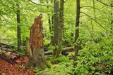 Dead Wood in Mixed Forest Photographic Print by Frank Krahmer