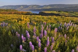 Rowena Plateau Wildflowers Photographic Print by Steve Terrill