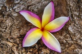 Tropical Gardens with close up of a Plumeria Flower Photographic Print by Terry Eggers