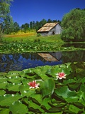 Barn and Waterlilies Photographic Print by Steve Terrill