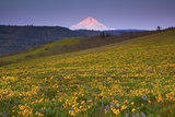 Sunrise over Wildflowers and Mt. Hood, Columbia River Gorge National Scenic Area, Oregon Photographic Print by Craig Tuttle