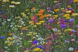 Colorful Wildflower Mixture Photographic Print by Steve Terrill