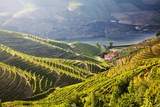 Terraced Vineyards Lining the Hills of the Duoro Valley Photographic Print by Terry Eggers