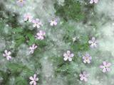 Storksbill Flowers Nestled in Cottonwood Seeds Photographic Print by Steve Terrill