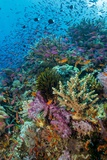 Abundance of Marine Life on a Coral Reef. Photographic Print by Stephen Frink