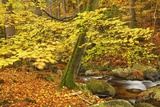 Beech Forest Inn Autumn Photographic Print by Frank Krahmer