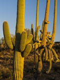 Sonoran Desert of the Saguaro National Park Photographic Print by Terry Eggers