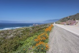 California Poppies along Highway 1 Photographic Print by Rob Tilley