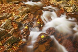 Forest Brook with Maple Leaves in Autumn Photographic Print by Frank Krahmer
