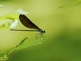 Damsel Fly Photographic Print by Gary Carter
