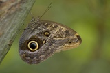 Tropical Butterfly Resting on a Branch. Photographic Print by Joe Petersburger