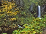 Upper Multnomah Falls Photographic Print by Steve Terrill