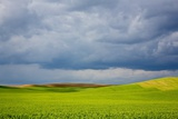 Spring Rolling Hills of Wheat and Fallow Fields Photographic Print by Terry Eggers