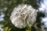 Seedhead Photographic Print by Joanna Jackson