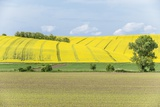 Spring Farm Fields Photographic Print by Rob Tilley