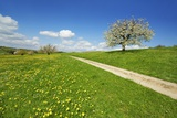 Cherry and Field Path Photographic Print by Frank Krahmer