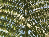 Palm Leaf Photographic Print by Joanna Jackson