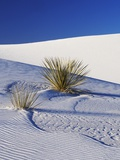 Sand Dune Patterns and Yucca Plants Photographic Print by Terry Eggers