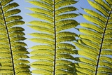 Cycad Leaf Photographic Print by Frank Krahmer