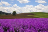 Dame's Rocket and Fields in the Willamette Valley of Oregon Photographic Print by Terry Eggers