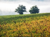 Autumn Vineyards with Bright Color Photographic Print by Terry Eggers